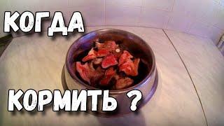 Когда кормить собаку ДО или ПОСЛЕ прогулки