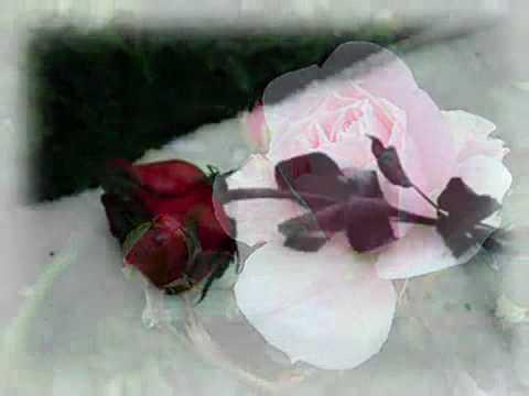 Kenny G   Sister Rose