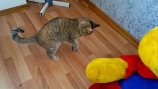 Скотч на животе кошки