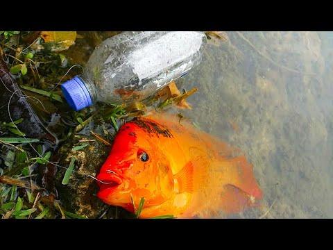 PLASTIC BOTTLE Fish Trap Catches BIG FISH! DIY Fishing