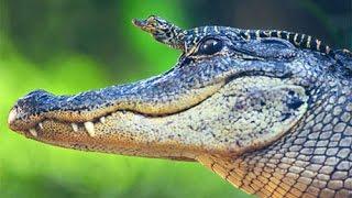 Рептилии 1.  Урок биологии.