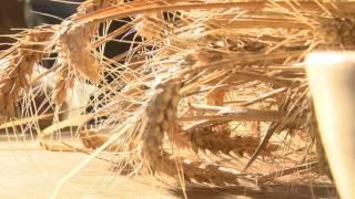Agriculture : la Région débloque des fonds