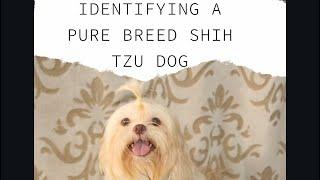 SHIH TZU BREED STANDARD