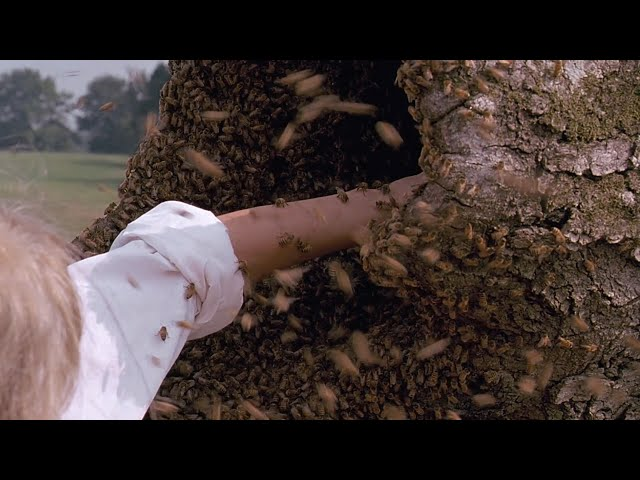 【宇哥】豆瓣8.5分,仅5千评分冷门神作,敢掏蜂巢的女孩《油炸绿番茄》