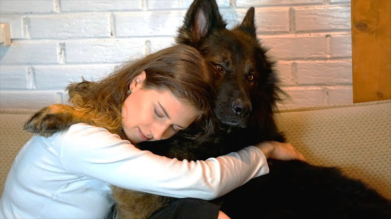 Crying in front of a protection Dog