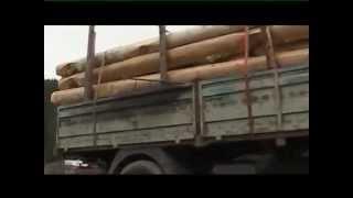 Ako sa stavia kanadský zrub