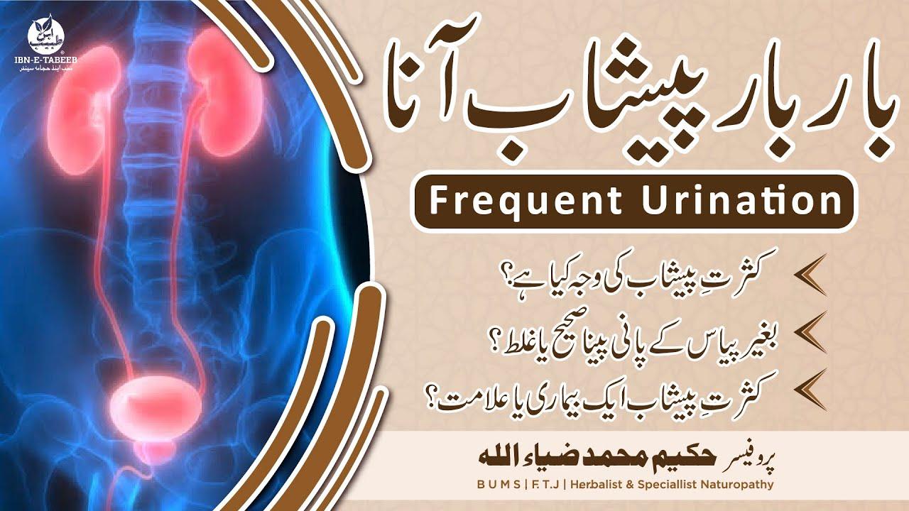 Kasrat e Peshab - Peshab ka bar bar ana - (Urdu/Hindi) IBN-E-TABEEB Herbal  Clinic