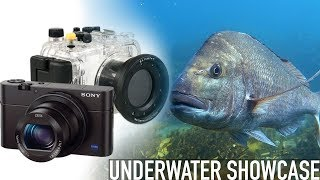 Sony RX100 III Underwater Showcase