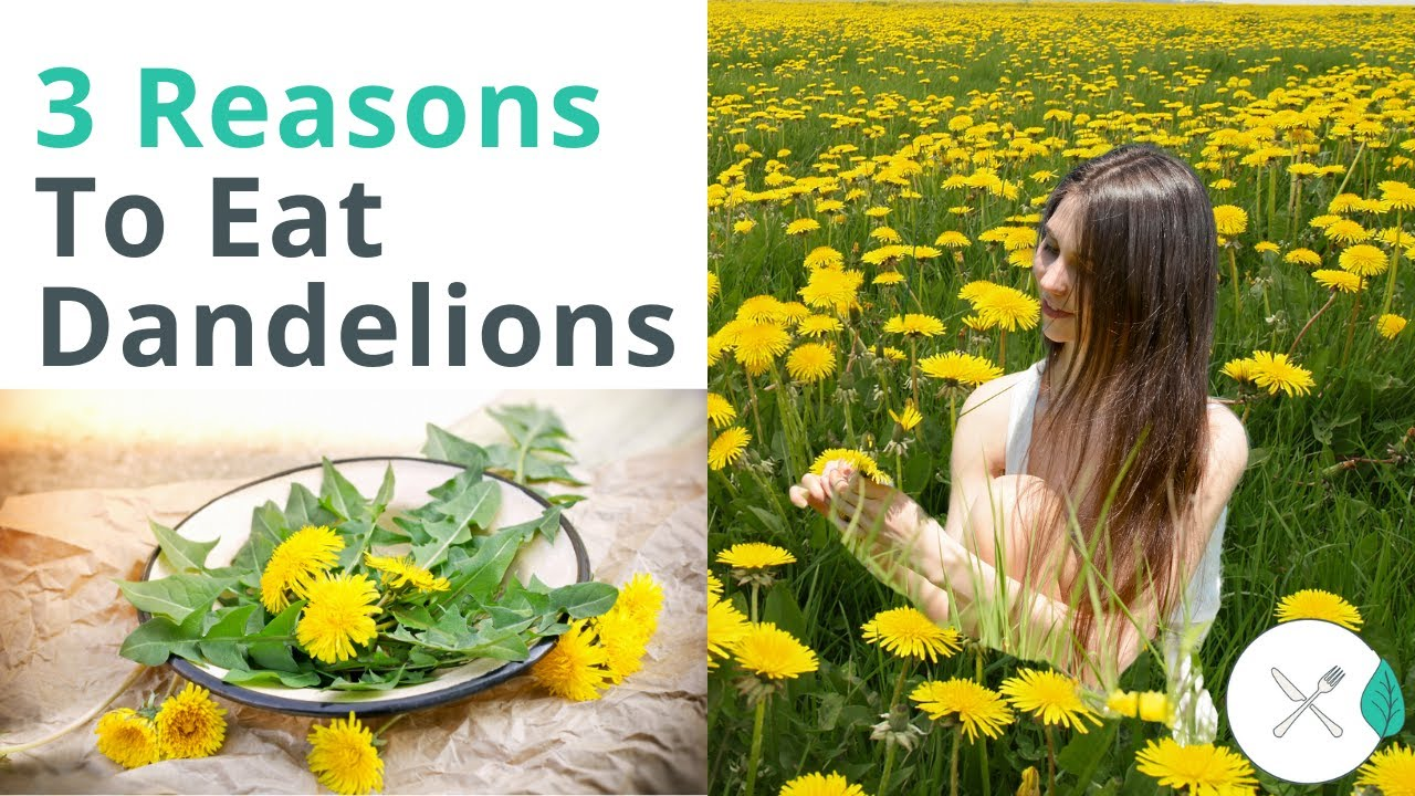 3 Reasons Eating Dandelions Could Help Your Gut Health