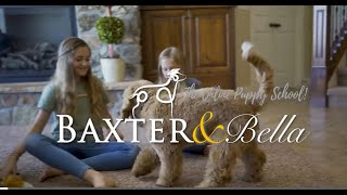 BAXTER & Bella - The Online Puppy School