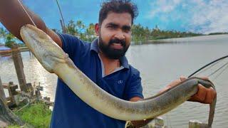 ഔഷധ ഗുണമുള്ള മീൻ പിടിച്ചു പക്ഷേ പണി കിട്ടി😱 Eel Catching Went Wrong