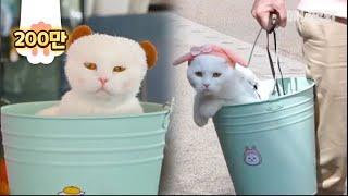 """냥동이 ㅣ Not A Bucket """"BuCat"""" Cat Living His Best Life Inside A Bucket LOL"""