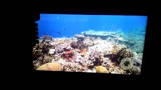 LG 43LH516A 43 Inch LED TV - Sample video played on it
