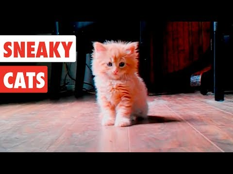 sneaky-cats|-funny-cat-video-compilation-2017