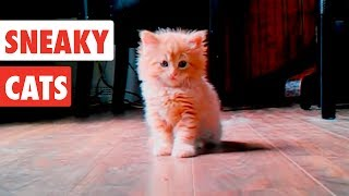 Sneaky Cats| Funny Cat Video Compilation 2017 thumbnail