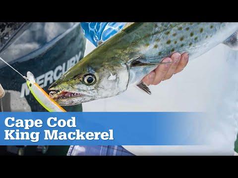 Cape Cod King Mackerel | S16 E2