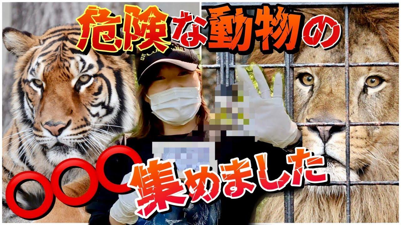 【閲覧注意】危険な動物達の○○○を集めたら衝撃の事実が!?www Dangerous animal droppings
