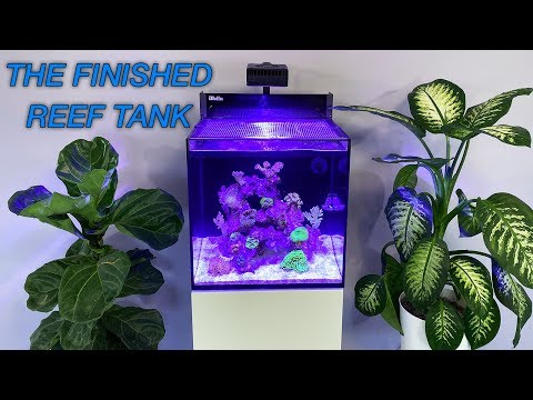 How to Setup a Reef Tank - Part 5: Hardy Beginner Fish & 'Cycling'