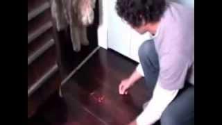 How To Teach Dog Puppy Boundaries