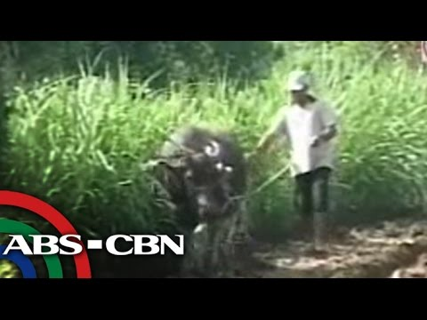 TV Patrol Panay - October 21, 2014