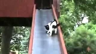 滑り台から滑り落ちる子猫さんを助ける親猫さん