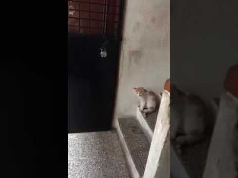 cute and train cat knocking at the door