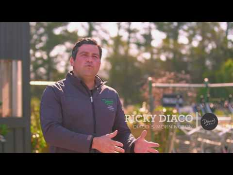 Diaco's Garden Nursery - Our Story