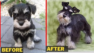 60 Small dog Breeds Before and After Growing Up  Puppies to Adult Dog Pictures in 2020