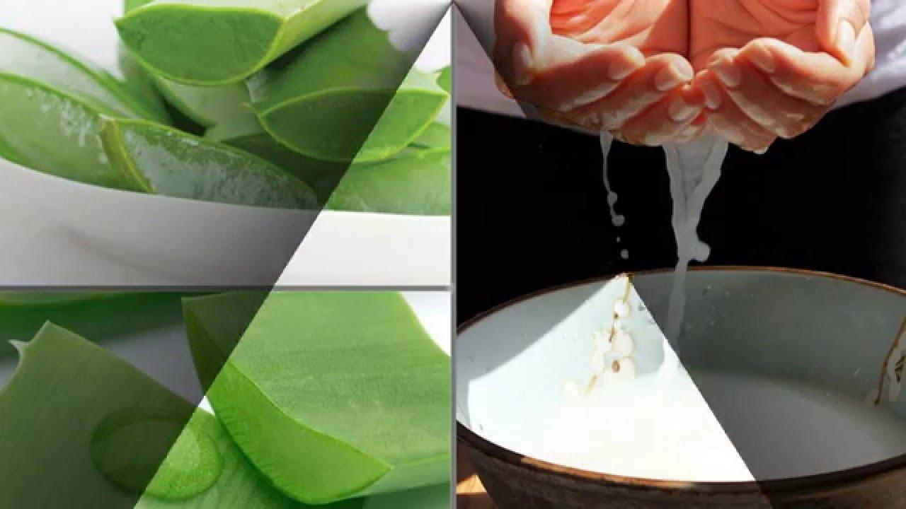 Kết quả hình ảnh cho Nước vo gạo + cây nha đam