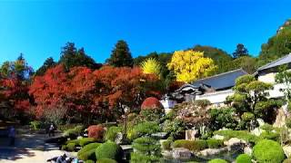 4K 2019 .11 .15 香川県さぬき市 絶景 大窪寺の紅葉