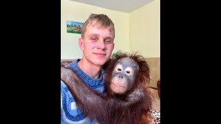 Орангутан Дана любит мерить одежду