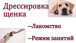 Дрессировка щенка-  выбираем   лакомство и режим обучения (сколько времени заниматься)