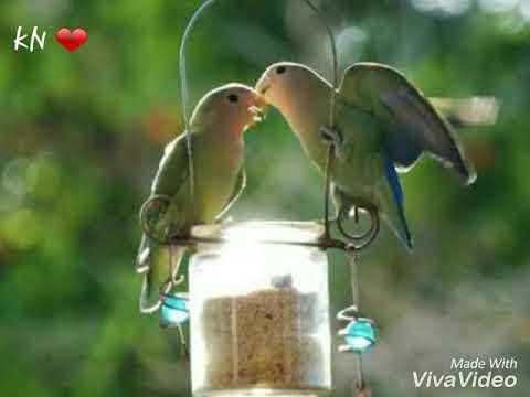 Panchhi Bole Hai Kya bahubali - WHATSAPP STATUS LOVE SONGS