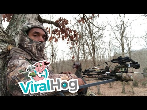 Turkey Keeps Hunter From Getting Game || ViralHog