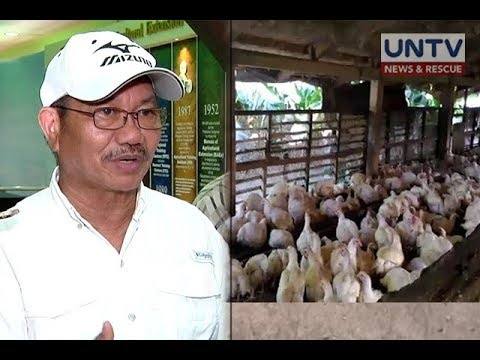 Transport ban ng mga poultry product sa Luzon, posibleng alisin na sa Setyembre – Sec. Piñol