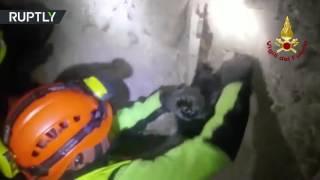 Спасение собаки из-под завалов в Италии