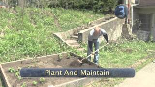 How and When to Plant Tomato Plants