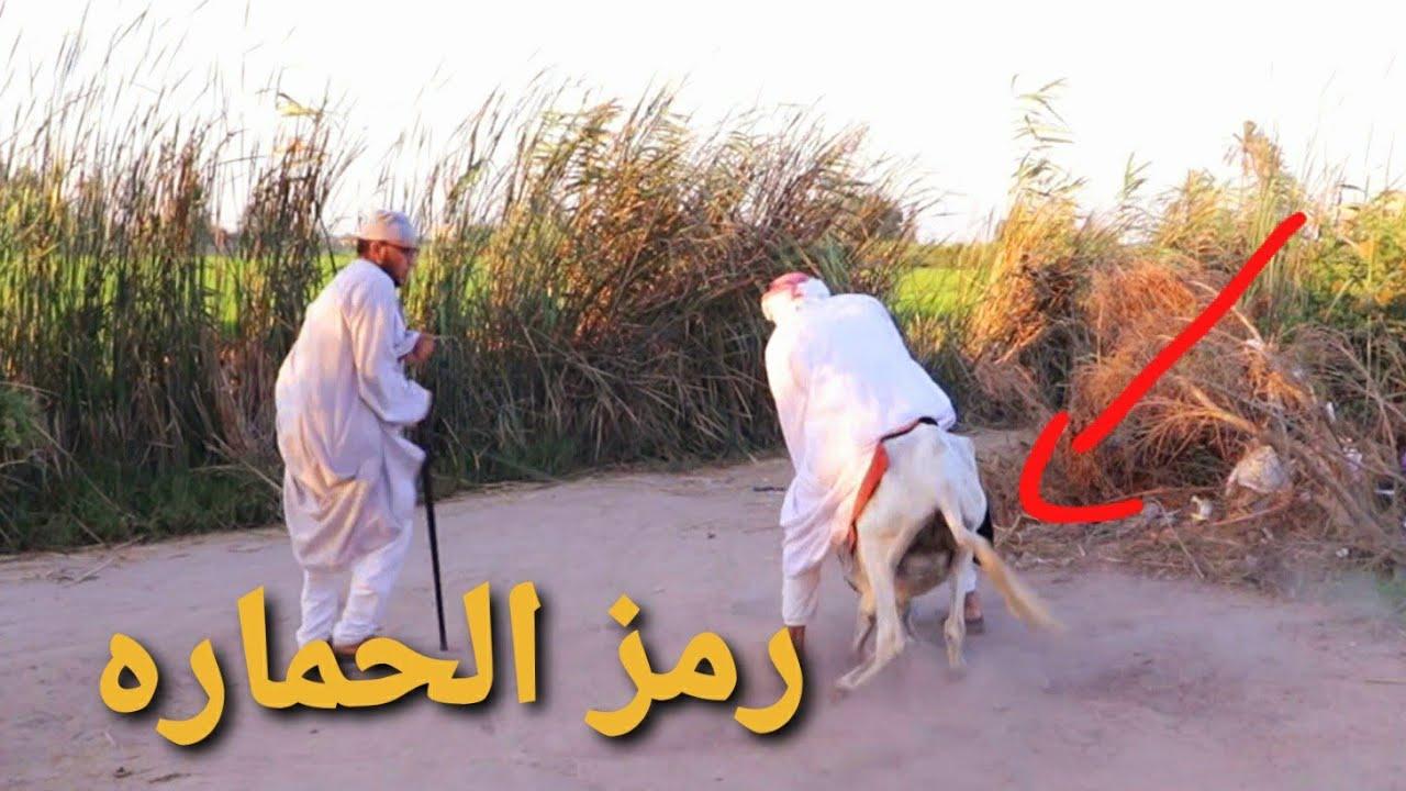 #9الحاج مقطوش عامل يعمل الحمله الانتخابيه بتاعته على الحمير هتفطس من ضحك 😁😅