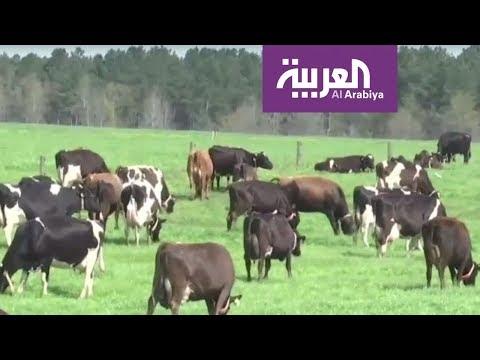 التكنولوجيا في خدمة البقر  - 18:22-2018 / 4 / 16