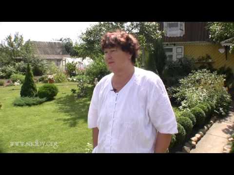 видео: Уютная дача
