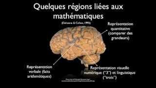 Comprendre le fonctionnement du cerveau pour mieux enseigner