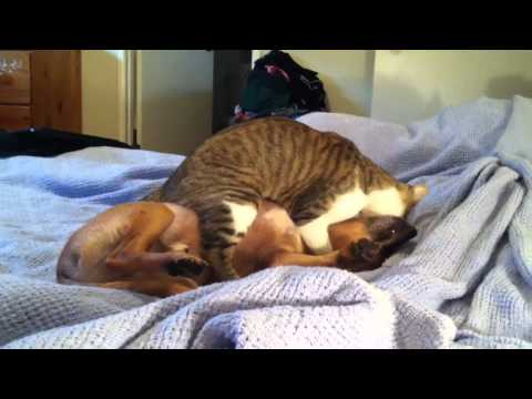 Cat and Dog make love