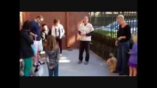 Puppy Training Classes At Irvine Vet Services