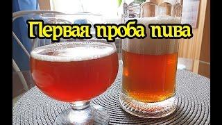 Первая дегустация домашнего пива