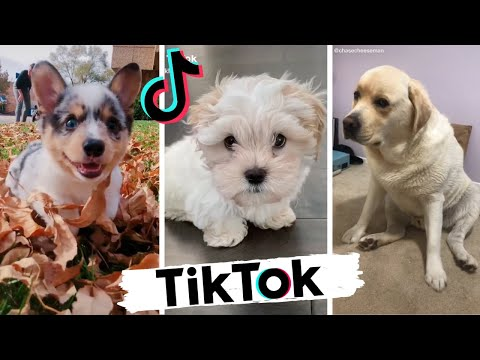 TikToks that make you go AAWWW ~ Funny Dogs of Tik Tok ~ Try Not to Laugh ~ Dog Squad