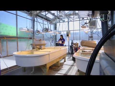 KU students grow algae for biofuel, cleaner water