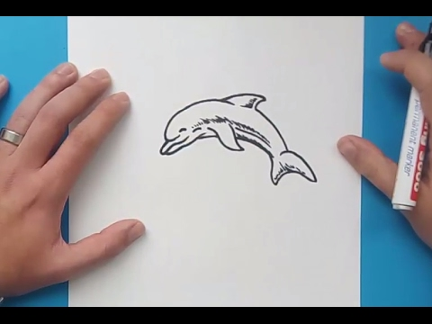 how to draw a dolphin youtube