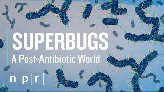 How Superbugs Could Mean The End Of Antibiotics | Let's Talk | NPR