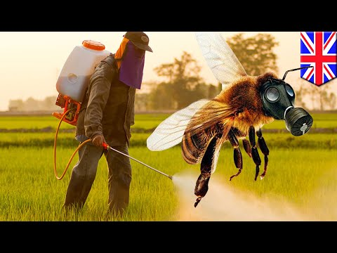 Pesticides and bees: Popular pesticides stop bees from laying eggs, study says - TomoNews