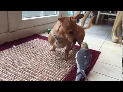 Bird sings to Dog